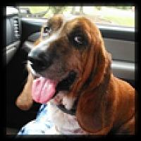Adopt A Pet :: Ginny - Marietta, GA