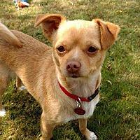 Adopt A Pet :: Angelina - Bellingham, WA