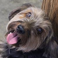 Adopt A Pet :: RUSTY - Hurricane, UT