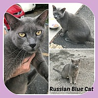 Adopt A Pet :: MR BLUE - Malvern, AR