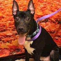 Adopt A Pet :: CHAMP - Upper Marlboro, MD