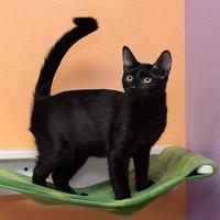 Adopt A Pet :: Makita - Baton Rouge, LA
