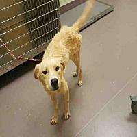 Adopt A Pet :: A030961 - Norman, OK