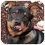 Photo 1 - Shepherd (Unknown Type) Mix Dog for adoption in Phoenix, Oregon - Casey