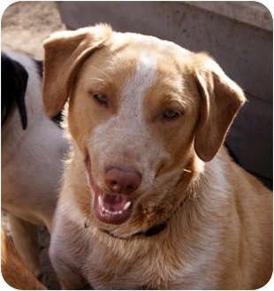 Basenji Mix Dog for adoption in Glenpool, Oklahoma - Raskal