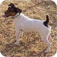 Adopt A Pet :: DINO - Phoenix, AZ
