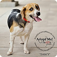 Adopt A Pet :: Darcy-Prison Obedience Traine - Hazard, KY