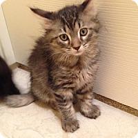 Adopt A Pet :: Taystee - Gilbert, AZ