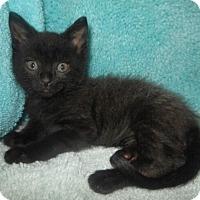Adopt A Pet :: No Ma'am - Reston, VA