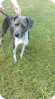 Pointer Mix Dog for adoption in Bellefontaine, Ohio - Raggedy Ann