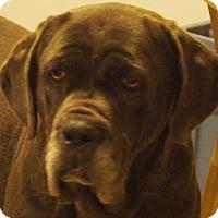 Adopt A Pet :: Bacall - Prole, IA