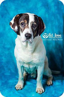 Labrador Retriever Mix Dog for adoption in Cincinnati, Ohio - Momo- Blind