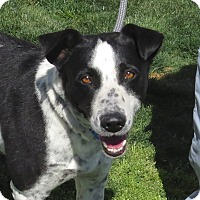 Adopt A Pet :: Checkers - Scottsdale, AZ