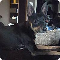 Adopt A Pet :: Chubs - Hamilton, ON