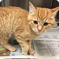 Adopt A Pet :: Stewie (& River) - Arlington, VA