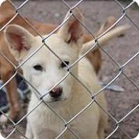 Adopt A Pet :: Quinta - Tucson, AZ