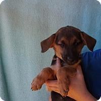 Adopt A Pet :: Nikita - Oviedo, FL