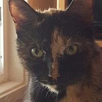 Adopt A Pet :: Mikayla - Encinitas, CA