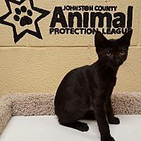 Adopt A Pet :: Lucky - Smithfield, NC