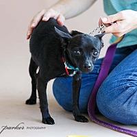 Adopt A Pet :: Mindy - Marietta, GA