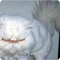 Adopt A Pet :: Tiffany - Jacksonville, FL