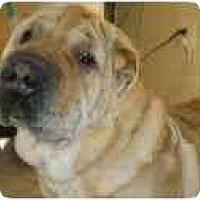 Adopt A Pet :: China - Bethesda, MD