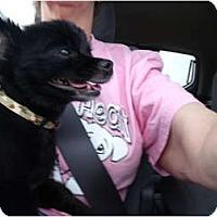 Adopt A Pet :: Jett - Glastonbury, CT
