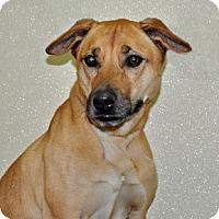 Adopt A Pet :: Roxie - Port Washington, NY