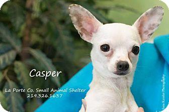 Chihuahua Dog for adoption in La Porte, Indiana - Casper
