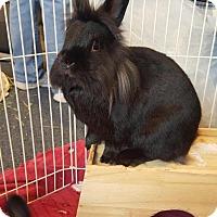 Adopt A Pet :: Fluffy - Conshohocken, PA