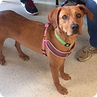 Adopt A Pet :: Molly in CT - Manchester, CT