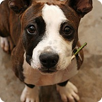 Adopt A Pet :: Tippy - McCormick, SC