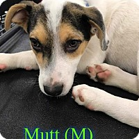 Adopt A Pet :: Mutt - Pensacola, FL
