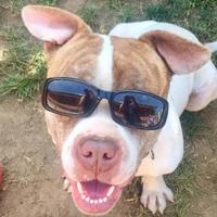 Adopt A Pet :: Big Daddy - Valley View, OH