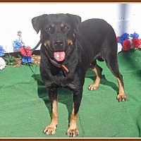 Adopt A Pet :: SANDEE - Marietta, GA