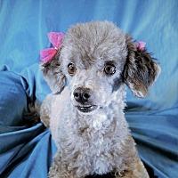 Adopt A Pet :: Cory Anne - San Diego, CA