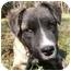 Photo 4 - Shepherd (Unknown Type)/Retriever (Unknown Type) Mix Dog for adoption in Mocksville, North Carolina - Toby