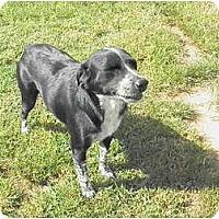 Adopt A Pet :: Nicki - York, SC