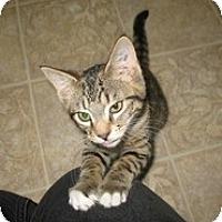 Adopt A Pet :: Frieda - Shelton, WA