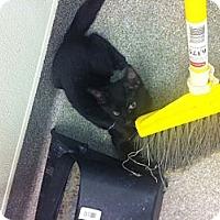 Adopt A Pet :: Ribot - Secaucus, NJ