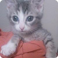 Adopt A Pet :: Margarite - Lawrenceville, GA