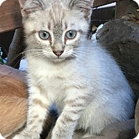 Adopt A Pet :: SnickersL - North Highlands, CA