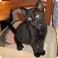 Adopt A Pet :: Arthur - Lacon, IL