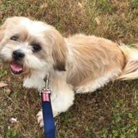 Adopt A Pet :: Brittany - justin, TX