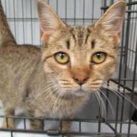 Adopt A Pet :: Phoenix - Ridgely, MD