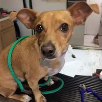 Adopt A Pet :: Boo Boo - Rio Rancho, NM