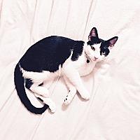 Adopt A Pet :: DJ - Tampa, FL