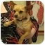 Photo 1 - Chihuahua Dog for adoption in Kingwood, Texas - Nemo