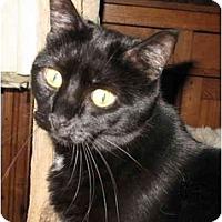 Adopt A Pet :: Chloe - Cincinnati, OH