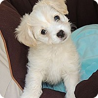 Adopt A Pet :: Sonny - La Habra Heights, CA